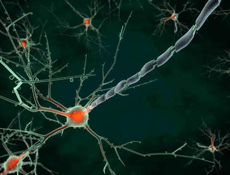 zenuwcel: Cellichaam van een neuron long shot