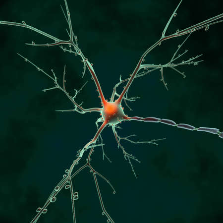 neuron nucleus Stock Photo - 13035657