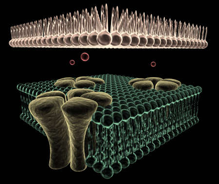 subunits: Ion Channels of a Cell