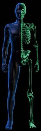 Translucent Human body and x-ray Skeleton on black Stock Photo - 13746939
