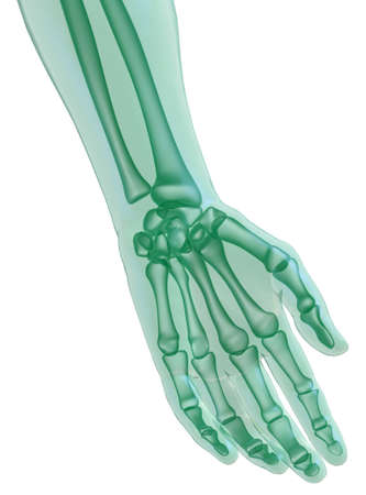 phalanges: Hand x_ray on white