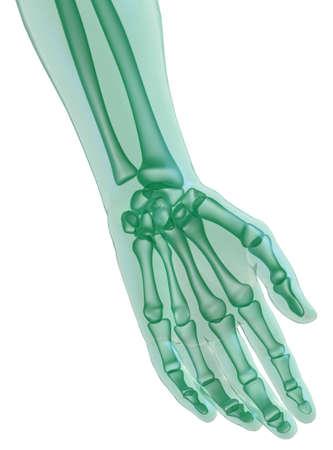 thumb x ray: Hand x_ray on white