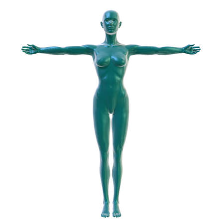 physiology: Female body on white, front view Stock Photo