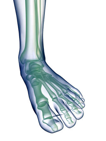 Foot x-ray on white photo