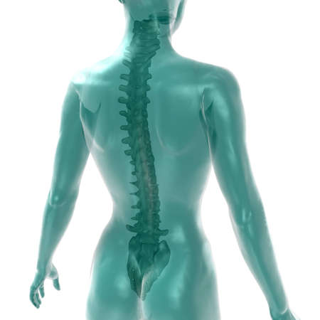 womens spine on white Stock Photo - 13854446