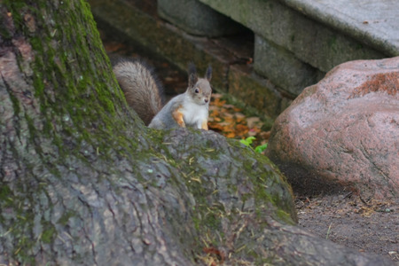 squirrel near stone photo