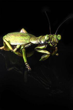 vividly: A praying mantis