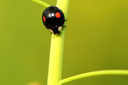 A ladybug climbing on the stem of plant photo