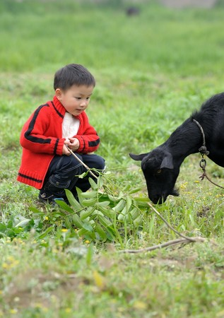 asian boy looking black goat Stock Photo