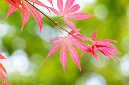 Red leaves Stock Photo - 7020105