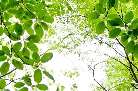 fresh green leaves Stock Photo - 7346554