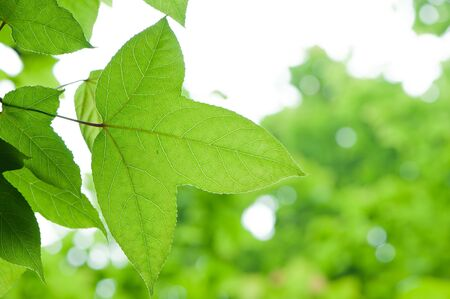 fresh green leaves photo