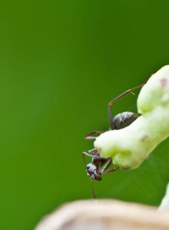 ant on Stem photo