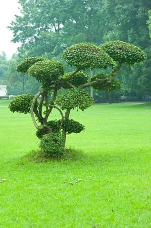 árbol en la hierba  Foto de archivo - 7910848