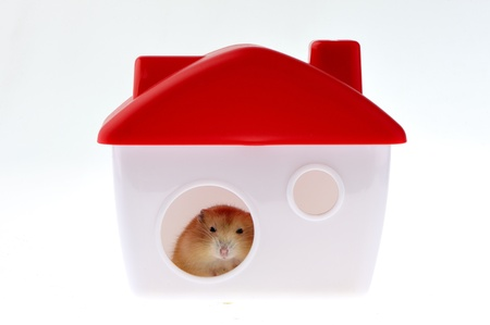 A cute little mouse, living in a small house there.