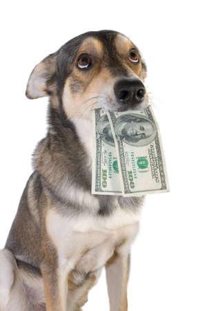 apporter: Funny chien tient dans la bouche de dollars, isol�s fond blanc