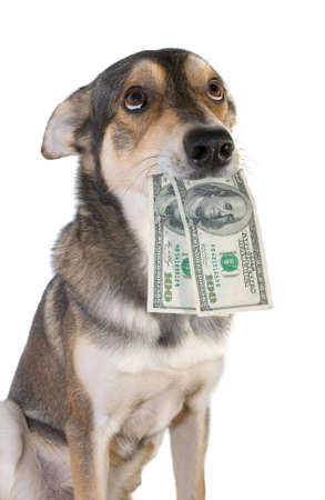 Funny dog holds dollars in mouth, isolated white background Stock Photo