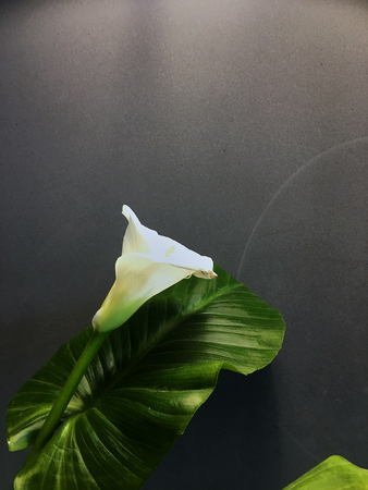 Image of white calla lilies on glass with water against white background