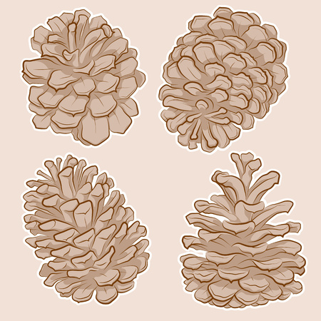 Isolated Pine Cones Drawing in Sketch Line Art Style