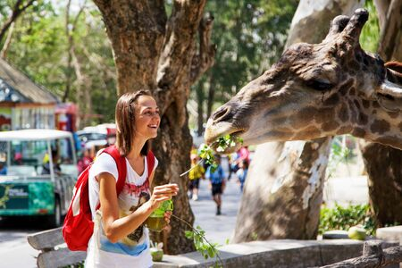 Young attractive woman feeding a giraffe at the zoo. Happy smiling woman feeding animals.