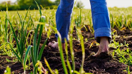 Barefoot farmer goes on the ground among the pea beds.