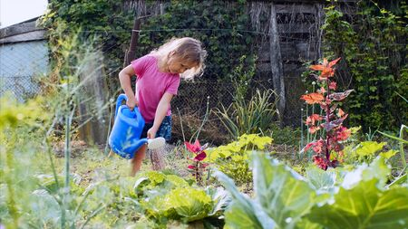 Little girl is watering cabbage from watering can in the kitchen garden.