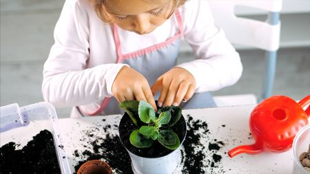 Little child girl is tamps the soil while a plants a houseplant at home, indoor 版權商用圖片 - 133772973