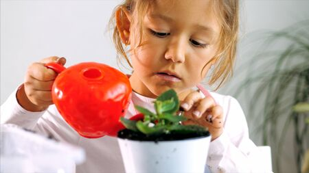 Little child girl is watering a houseplant after replant at home, indoor