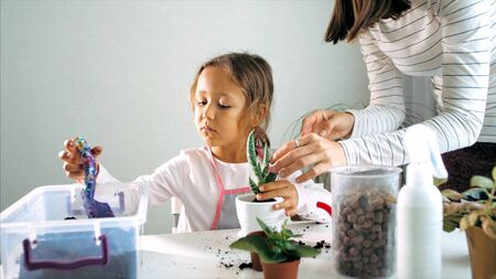Little child girl replant a flower at home, indoor