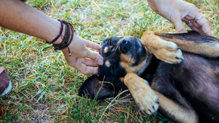 Woman is gently stroking mongrel dog outdoor, close-up