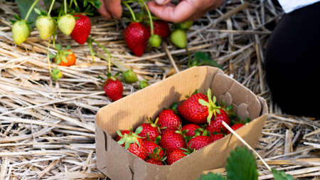 Pasteboard box with strawberry on the firm field