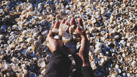 Close-up hands of a girl who collect seashells 免版税图像