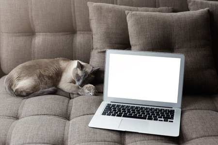 Resting at home and serfing internet concept. Modern laptop computer with blank copy screen on cozy grey sofa near sleeping thai cat. Natural soft light. Mock up for your advertising content