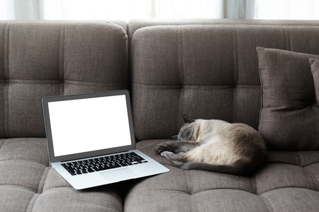Freelance, working at home concept. Laptop with copy space screen on a comfortable sofa and sleeping sweetly cat. Soft natural light from the window. Empty space for your advertising content Фото со стока