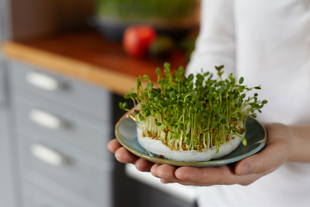 Woman hands holding a dish with mix of fresh sprouts against cozy kitchen interior. Home growing micro greens for a healthy diet. Healthy food, health care concept. Фото со стока