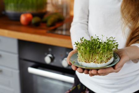 Cropped shot of a woman holding in her hands a saucer with a home grown organic sprout micro greens against cozy kitchen interior. Healthy Raw food concept. Copy space for text. Selective focus
