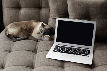 Close up of empty white laptop screen and sleeping cat in modern cozy interior at home. Tranquility, coziness, pet care and lifestyle concept. Empty space for your promotional content. Natural light.