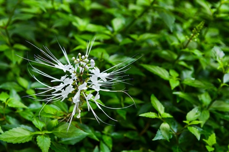 White flowers that bloom in the garden. Stock Photo