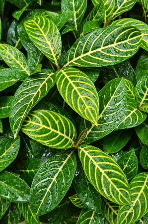 Patterns were drawn on the natural leaf.