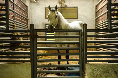 Horseback riding is confined in its Stock Photo