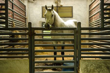 confined: Horseback riding is confined in its Stock Photo