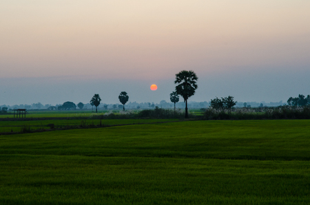 The beauty of rice farm in Thailand.