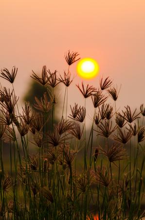 Sneak grass alone Under a weak solar flares