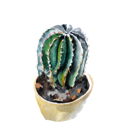 watercolor cactus nature vector illustration Vector