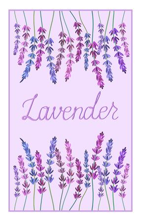 illustation: Lavender design decorative vector illustation Illustration