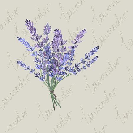 Lavender nature oil vector illustration Vector