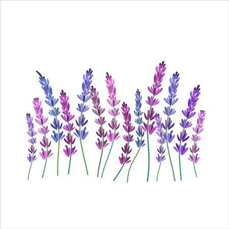 fiori di lavanda: Progettazione Lavender decorativo vettore illustation