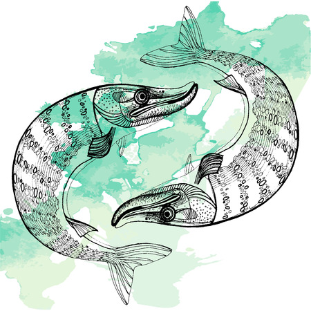 northern: northern pike vector illustration set Illustration