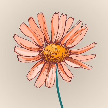 golden daisy: daisy flower beautiful vector illustration