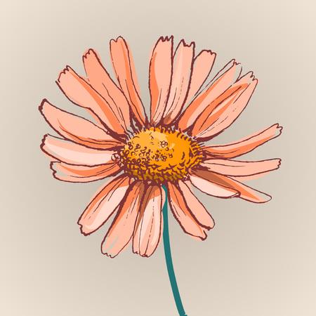 golden daisy: flor de la margarita hermosa ilustraci�n vectorial